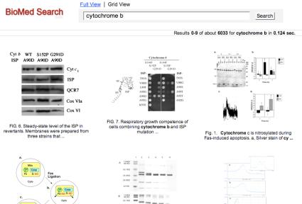 BioMedSearchcytochromeb