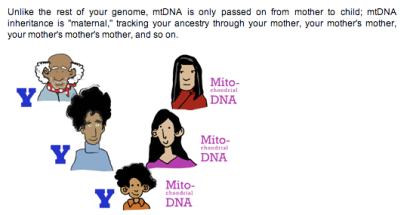 maternal mitoDNA