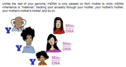 inF A Q  for 23andMe: what if I have mitochondrial DNA from