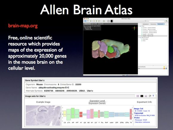 SciFoo Brain Atlas