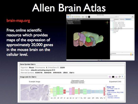 SciFoo Brain Atlas