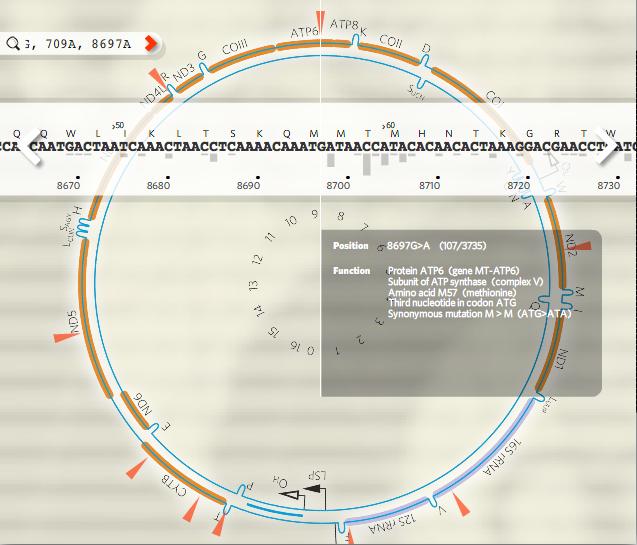 23andmethaplogroupattilasnps1